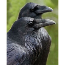 "New! Raven ""Olive"" w/Denim Stripes Set"